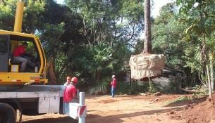 Árvore_Bragança