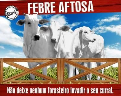 febreaftose_piracaia
