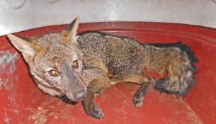 01.08.2014 Prefeitura resgata animais silvestres (2)