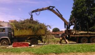 Retirada de árvores na Praça do Cemitério