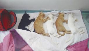 gatos-site