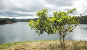 alckmin reflorestamento jaguari