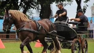 14.11.2015-9ª-Fecorb-Feira-das-Nações-e-Exposição-do-Cavalo-Bretão-e-Convidados-recebem-12-mil-visitantes-Foto-Gabriela-Araújo30