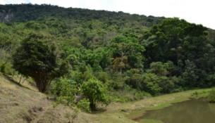Foto: Floresta da RPPN Jacuaçu próxima a entrada da propriedade, Extrema, MG