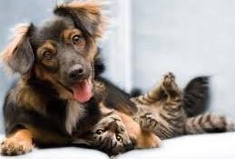 cao e gato