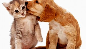 cães-e-gatos1-620x420