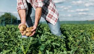232209-agricultura-sustentavel-entenda-o-conceito-e-beneficios