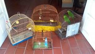 27.07.2020 Aves silvestres são apreendidas no Jardim São Miguel 02