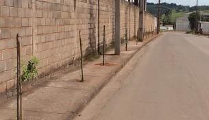 prefeitura retoma programa de arborização