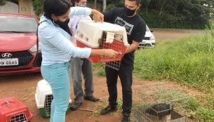 11.02.2021 Meio Ambiente realiza soltura de animais silvestres em Parque Natural Municipal  (2)