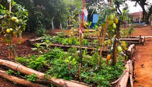 Hortas Escolares e Comunitárias unem teoria e prática para alimentação saudável e educação ambiental em Bragança Paulista